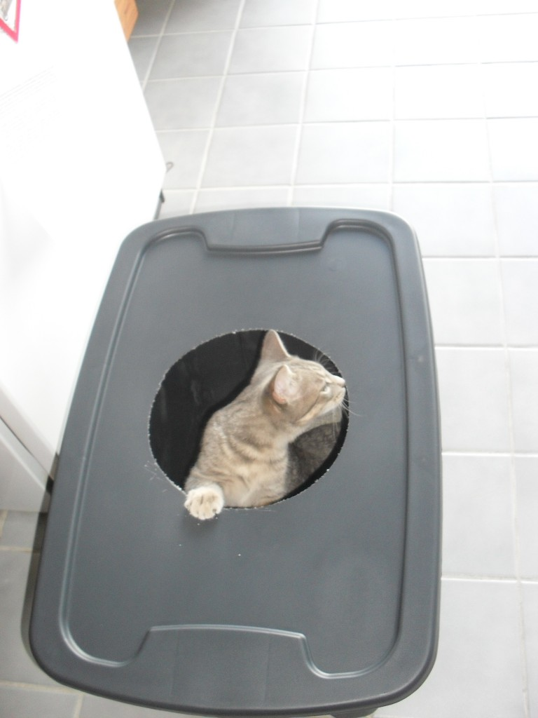 Why isnt my cat using his litter box