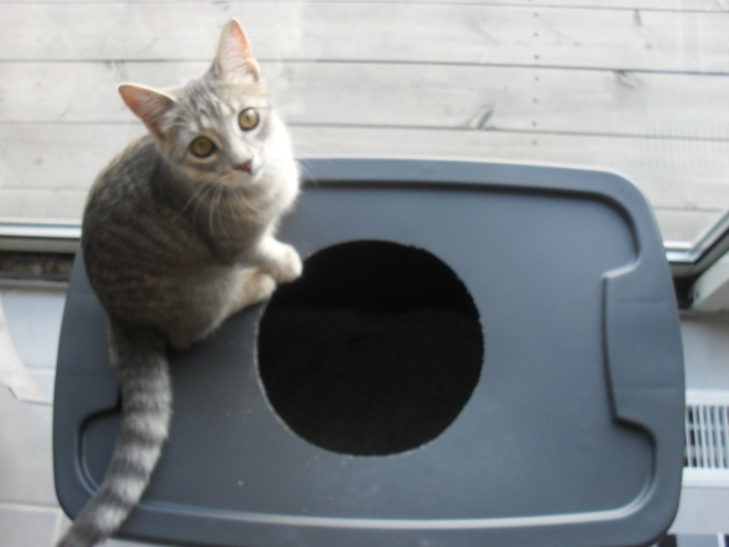 making your own litter box for your pet