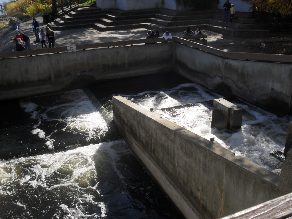 grand river, grand rapids, michigan fish ladder