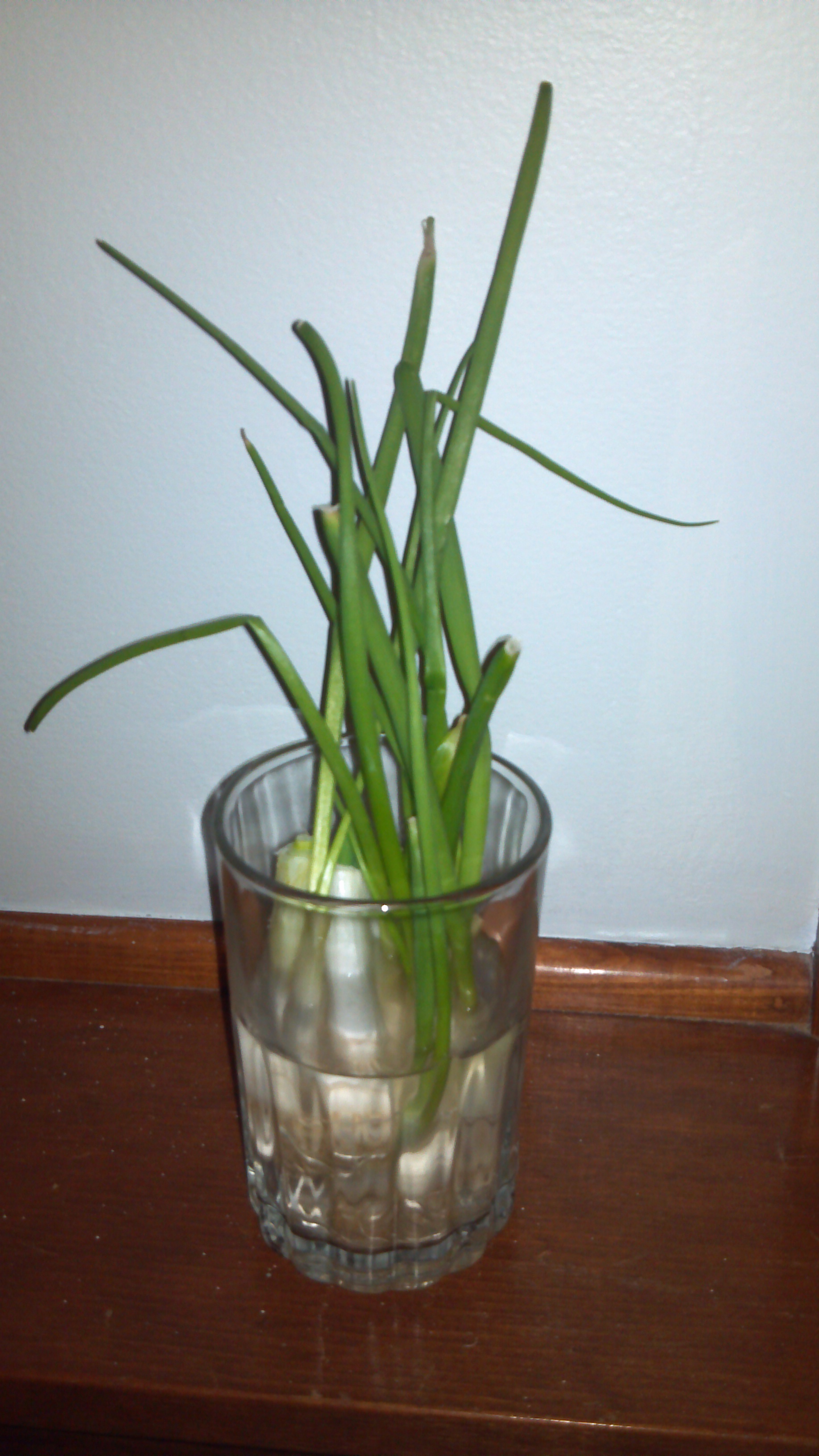 *Growing Green Onions*