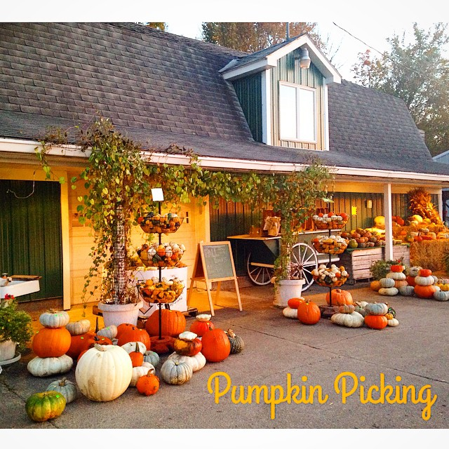 Went pumpkin picking this weekend at this local farm! Where do you pick yours?