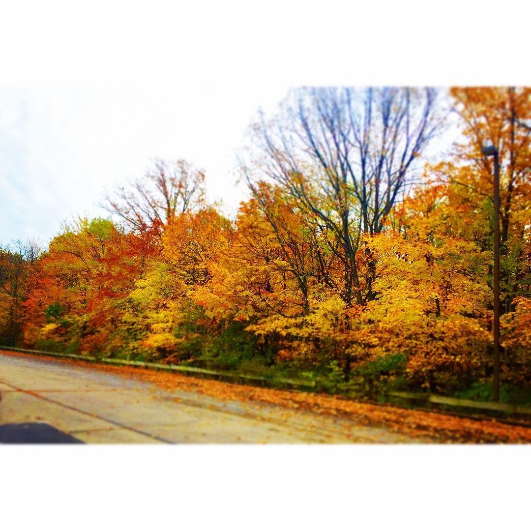 Fall is in full bloom🍃🍂🍁
