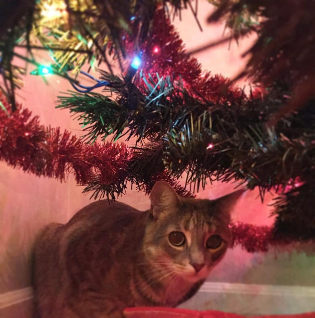 Merry Catmas🎄