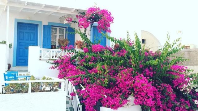 Vibrant beauty 🌺