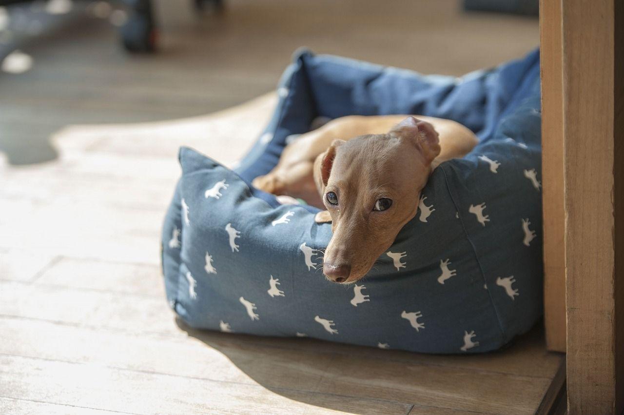 loft space for pets
