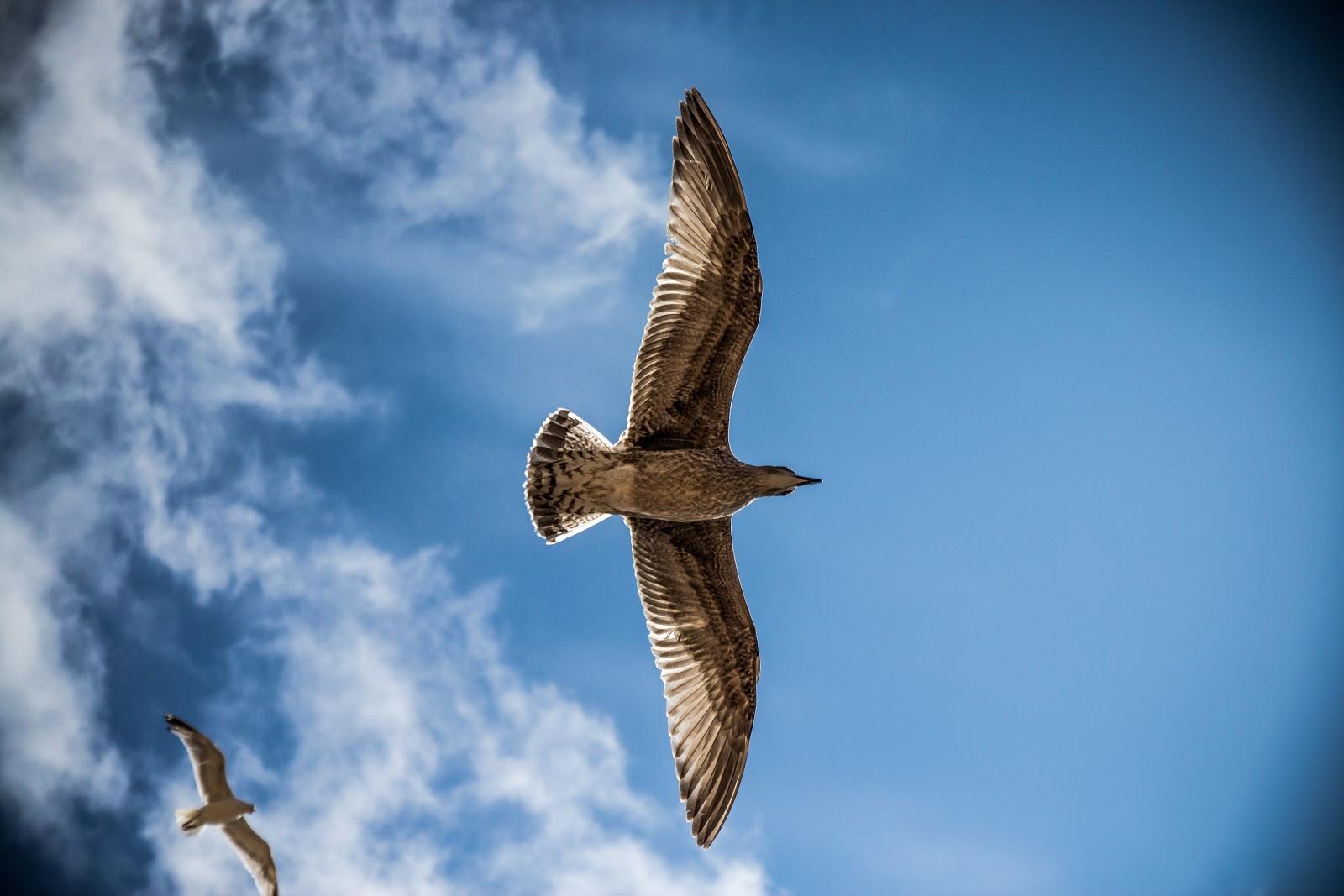 traveler bird