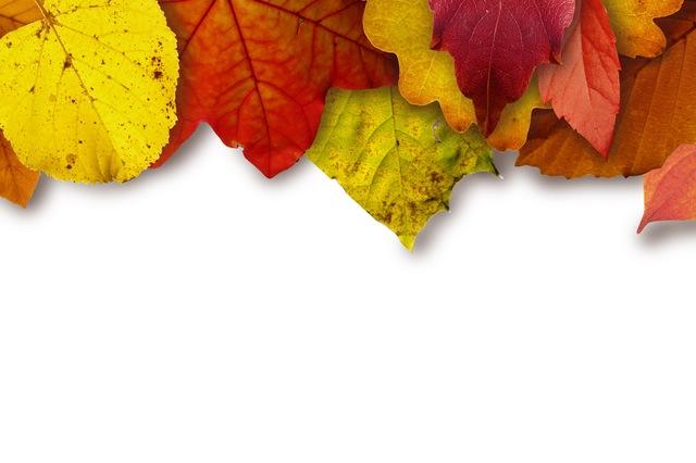 New Year Season autumn leaves