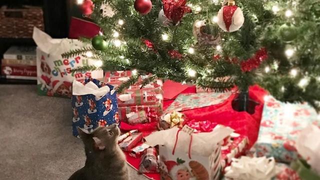 Waiting for Santa 🎅🏼 #twomoredays