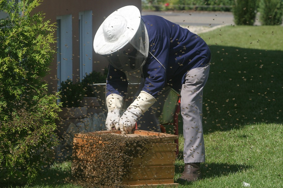 Bees Aren't Pests man harvesting bee hive