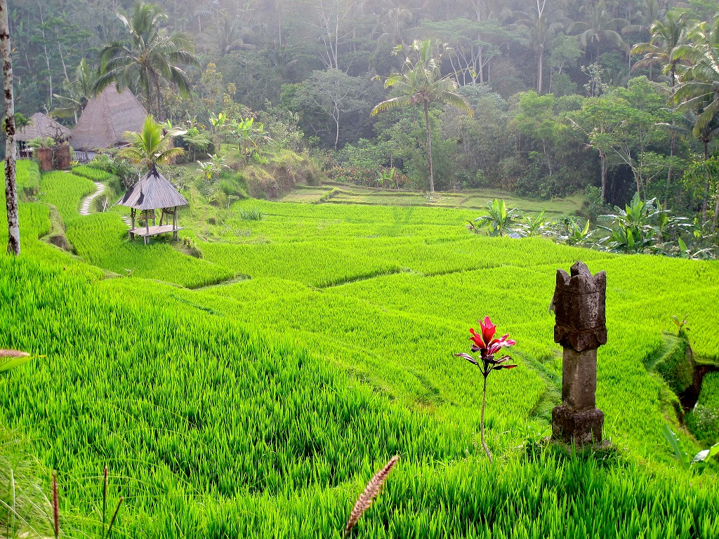 spiritual transformation in green pastures bali