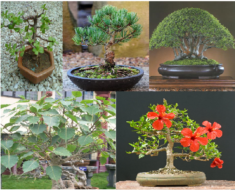 bonsai tree collage of plants