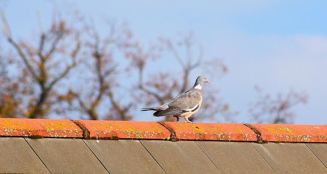 DIY Projects bird sitting on roof peak