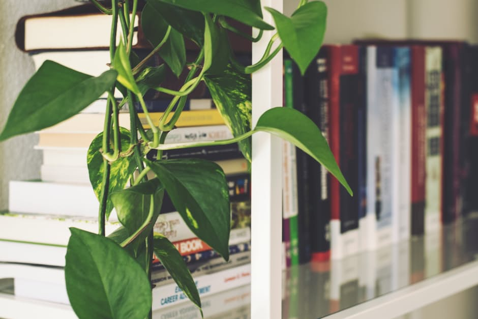 Allergy-Proof plant in home
