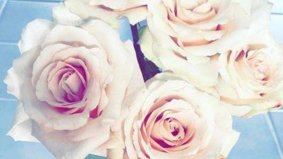 White roses 🌹