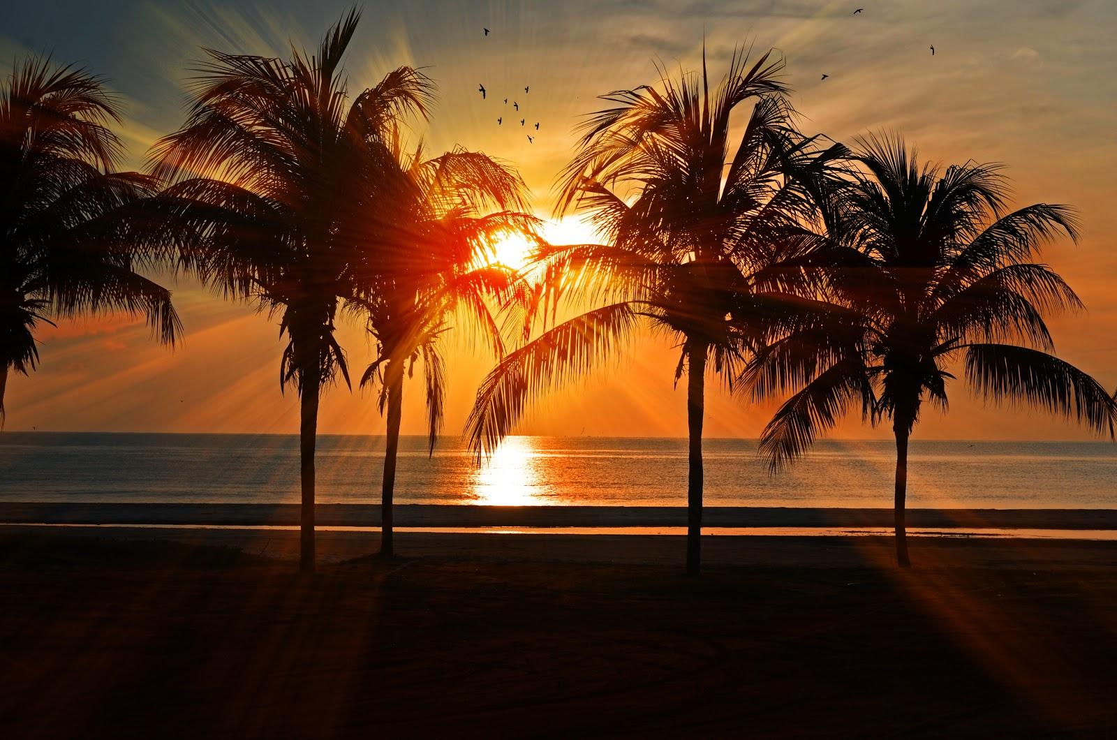 Summer palm trees setting sun