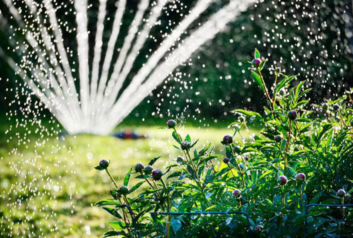 Why you shouldn't stop watering your garden and trees