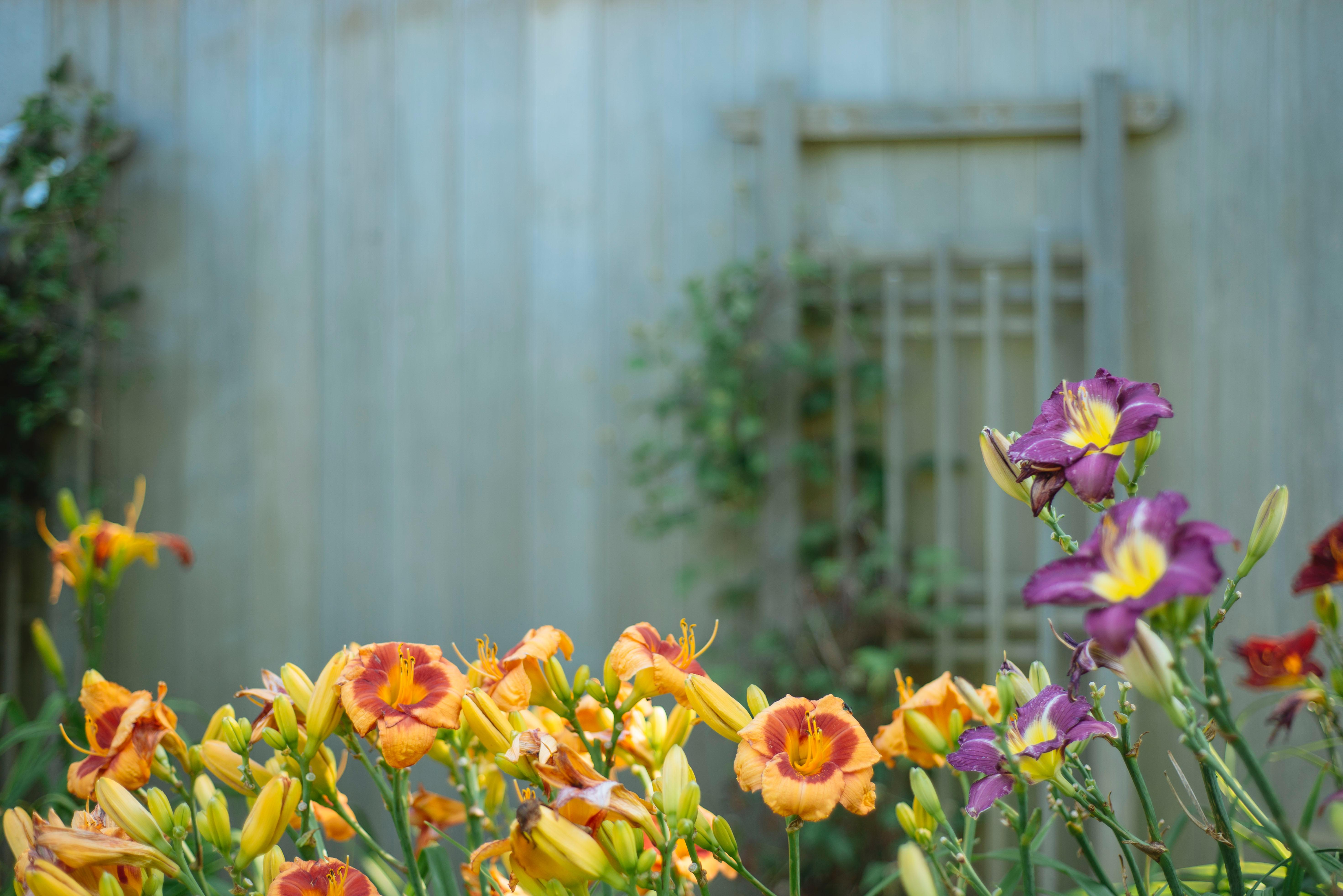 Beautiful Backyard flowers blooming outside