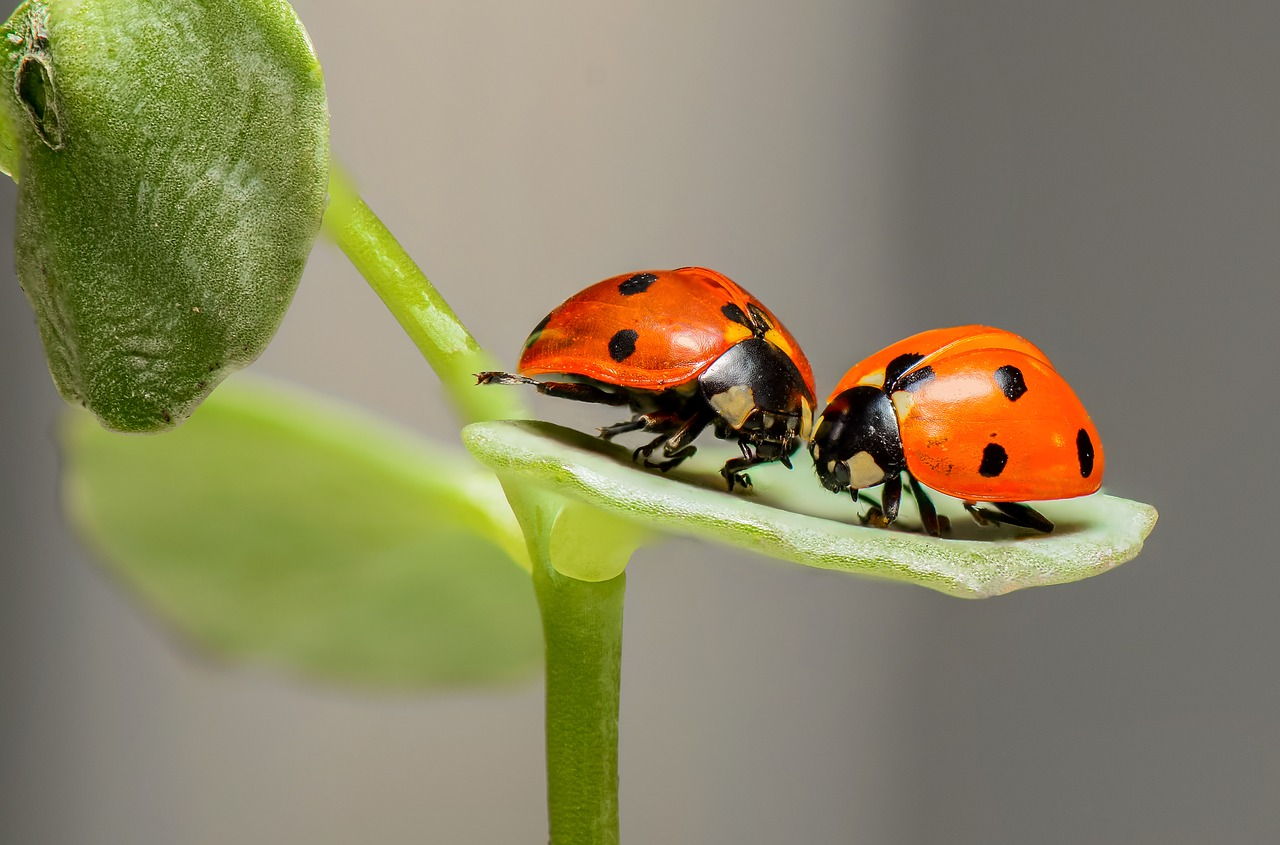 lady bugs inside of home