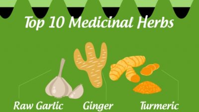 Top 10 Medicinal Herbs…And What They Treat