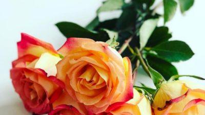 Weekly roses 🌹