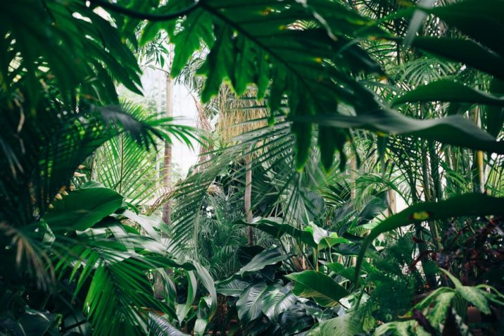 Indoor-Outdoors palm trees