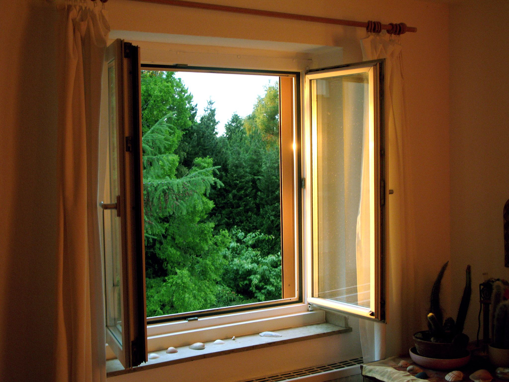 open window letting in pests at home