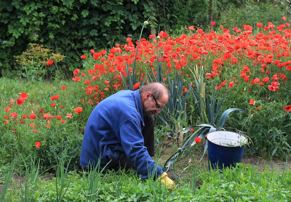 planning for old age tulips