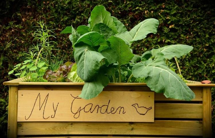 Garden Bed herbs growing