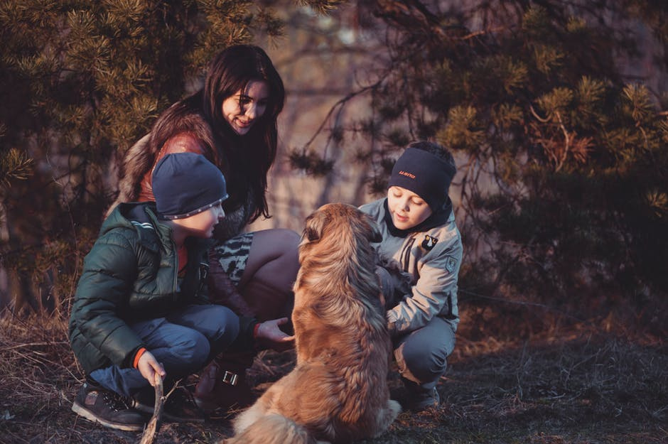 Confidence in kids petting a dog