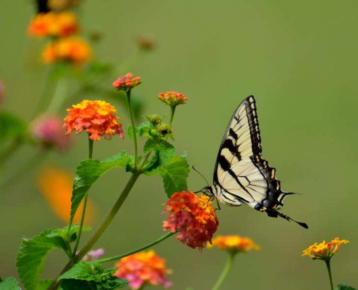 Healthy Mind butterfly on flower branch
