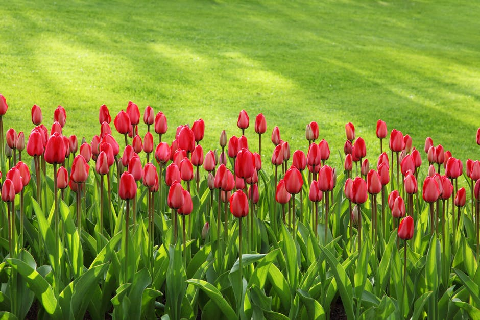 easy gardening red flowers