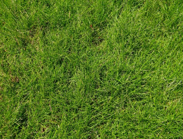 guide to controlling weeds in garden
