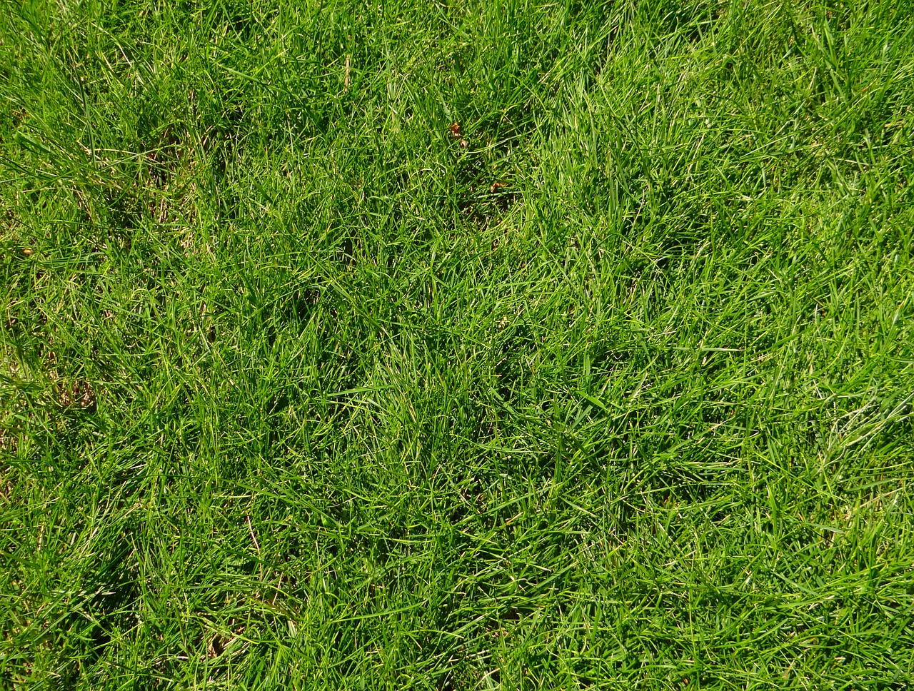 Control Lawn Weeds grass