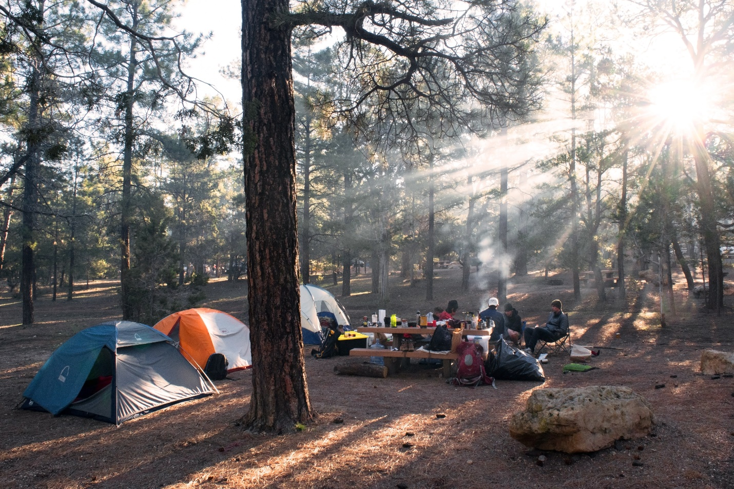 Camping tents in middle of forest
