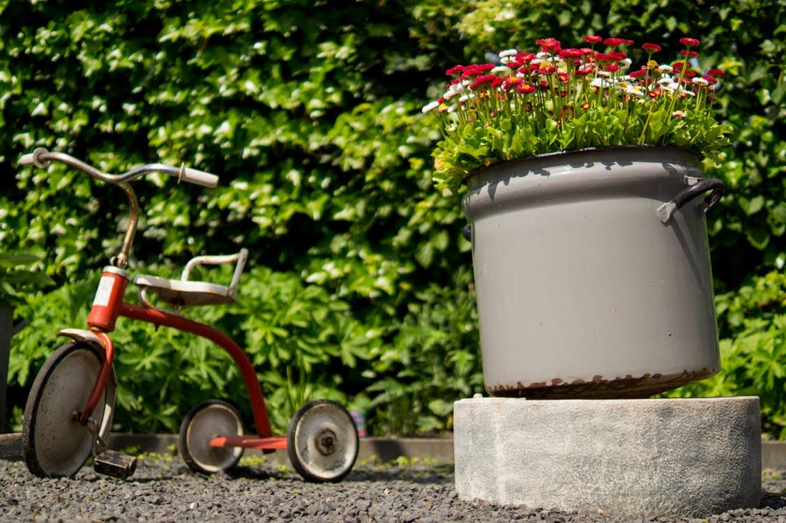 Garden tricycle by ivy wall