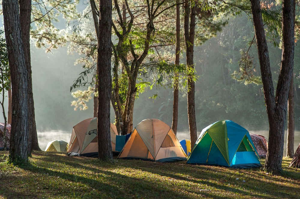 Family Camping tents under trees