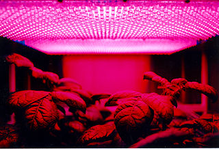 LED Grow Lights indoor garden