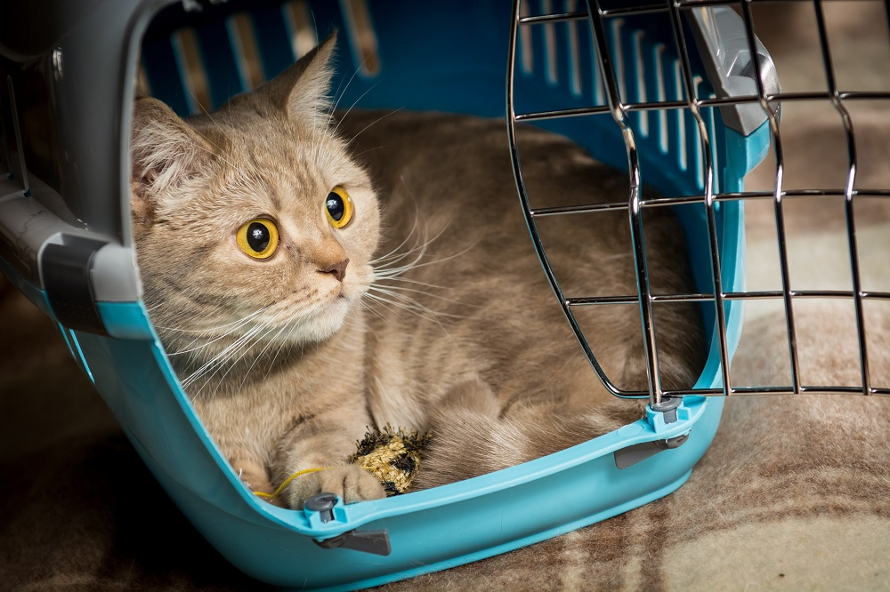 Cats In Cars in carrier