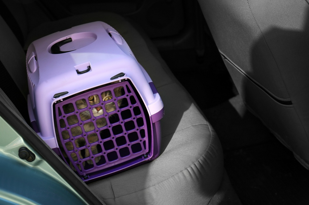Cats In Cars cat carrier