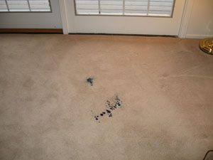 Get Stains Out of dirty carpet