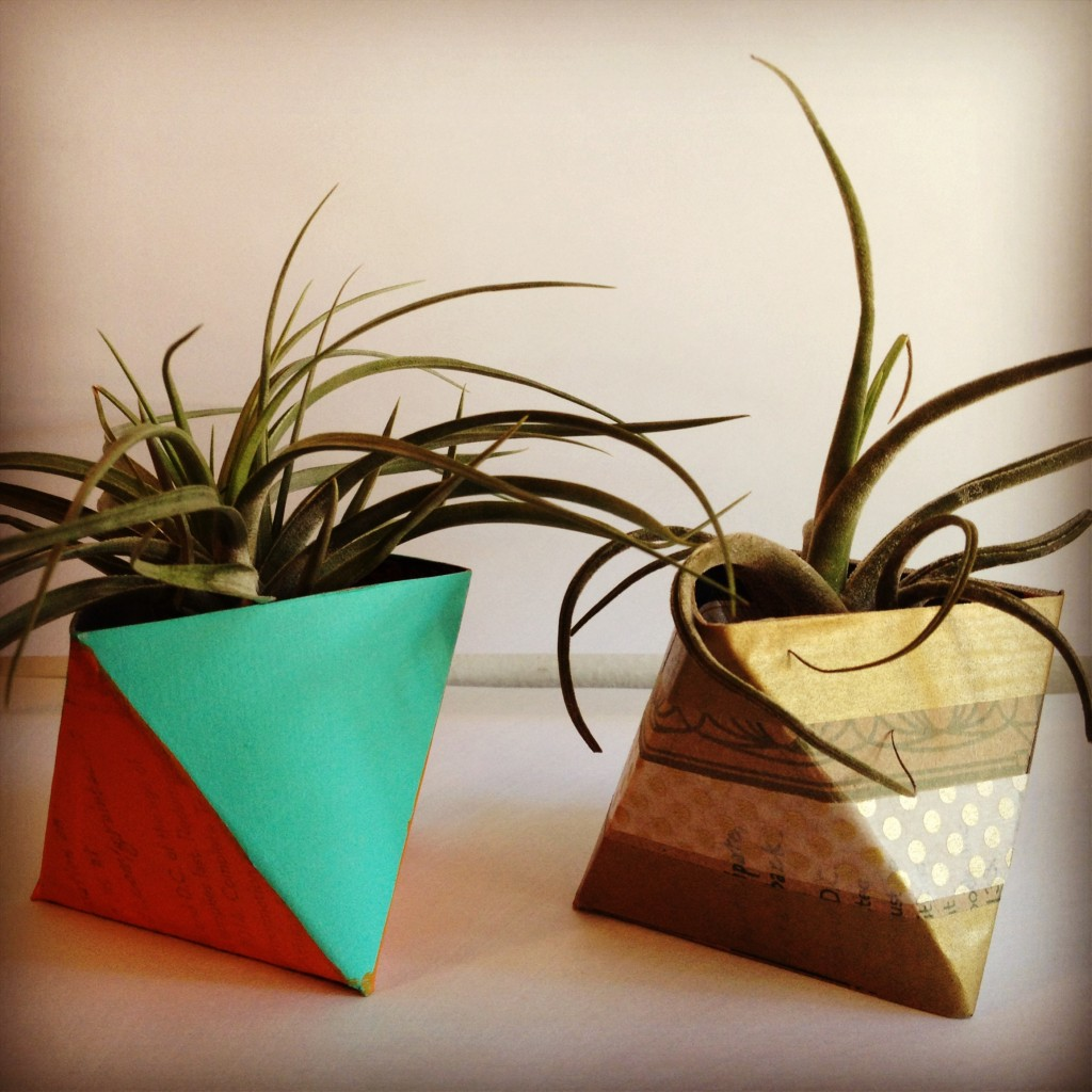 DIY Creative Ideas aloe plants