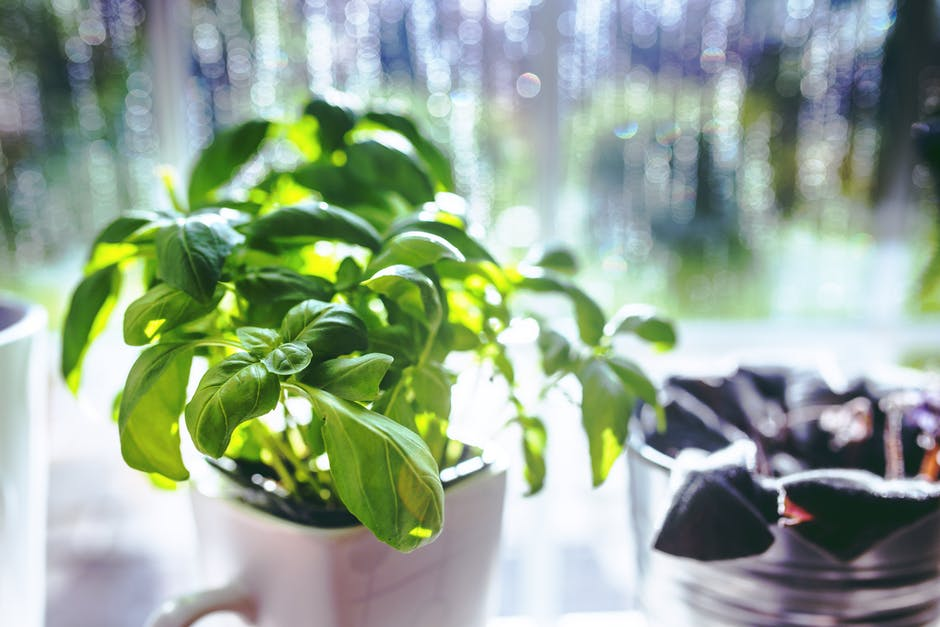 New Recipes herb garden