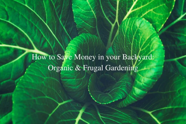 How to Save Money in your Backyard: Organic & Frugal Gardening