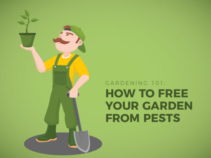 Gardening 101: How to Free Your Garden from Pests