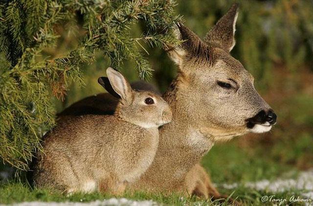 rabbits garden pests eat plants