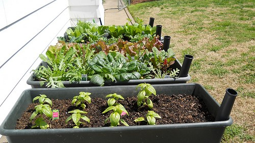 How to Use Your Garden for Sustainable Living