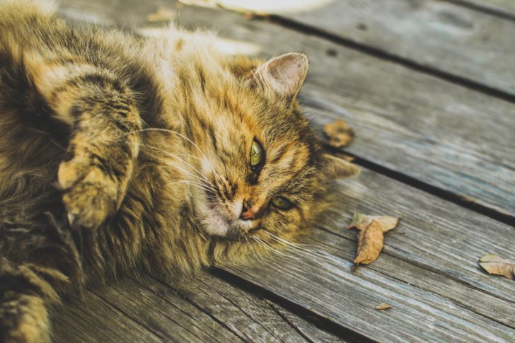 Shady Summer Snoozing: How to Keep Your Cat Happy in the Heat