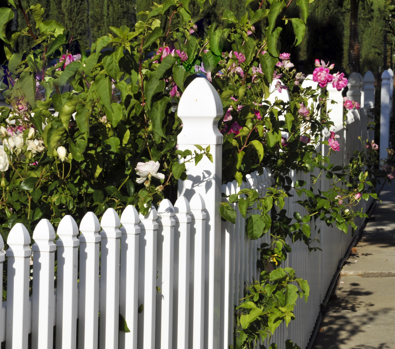 Throwback Thursday: The White Picket Fence pink flowers