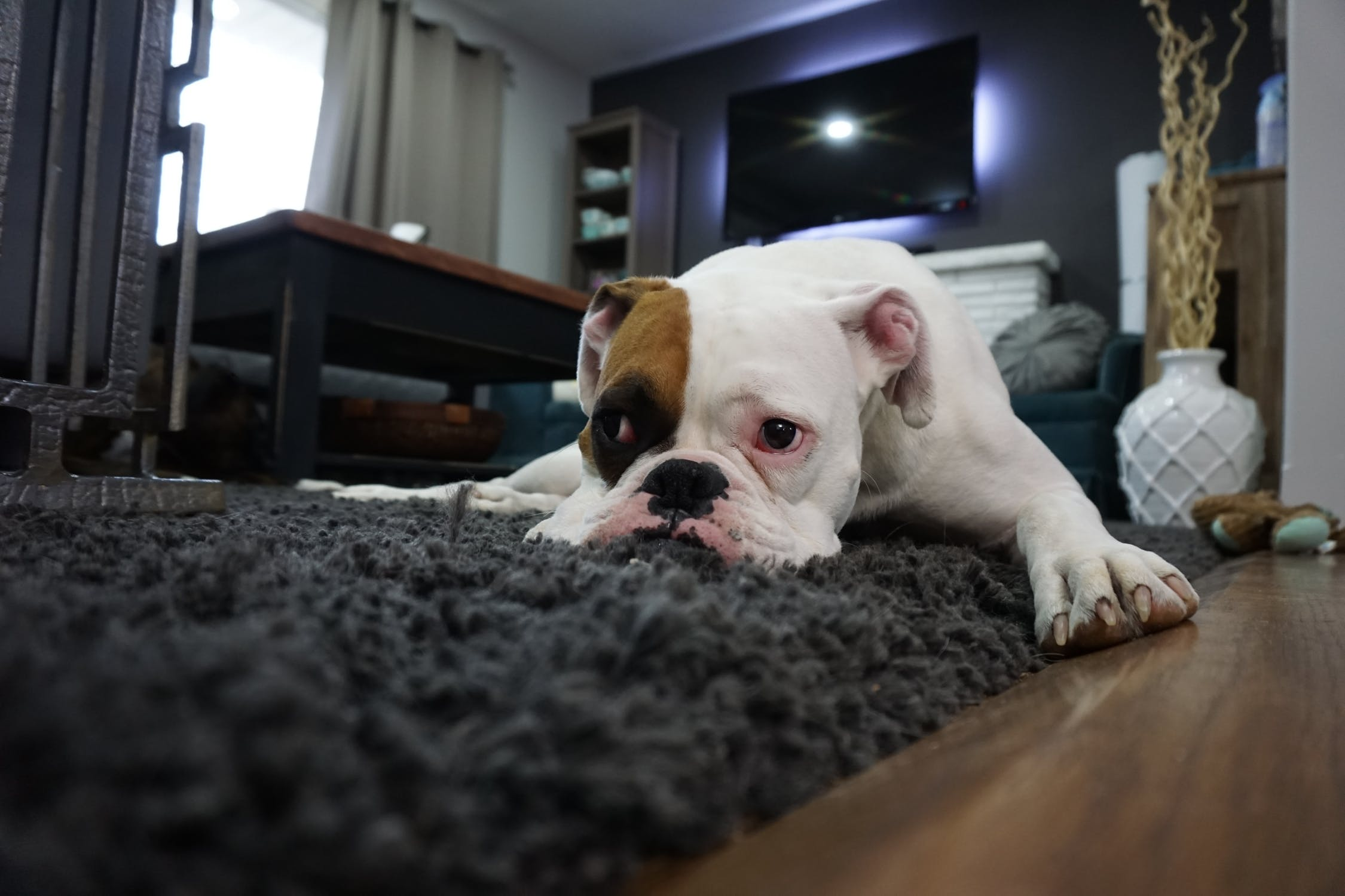 6 Ideas to remove pet hair and keep home clean
