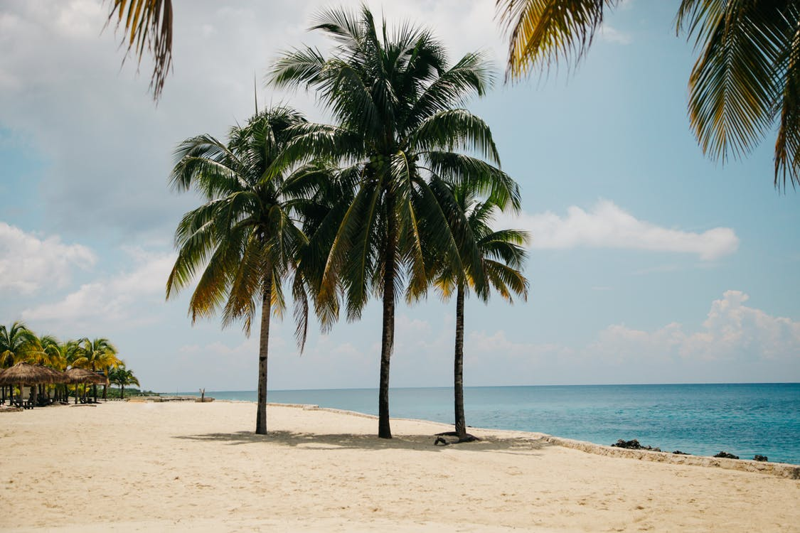 4 Essential Pruning Tips for Healthy Palm Trees